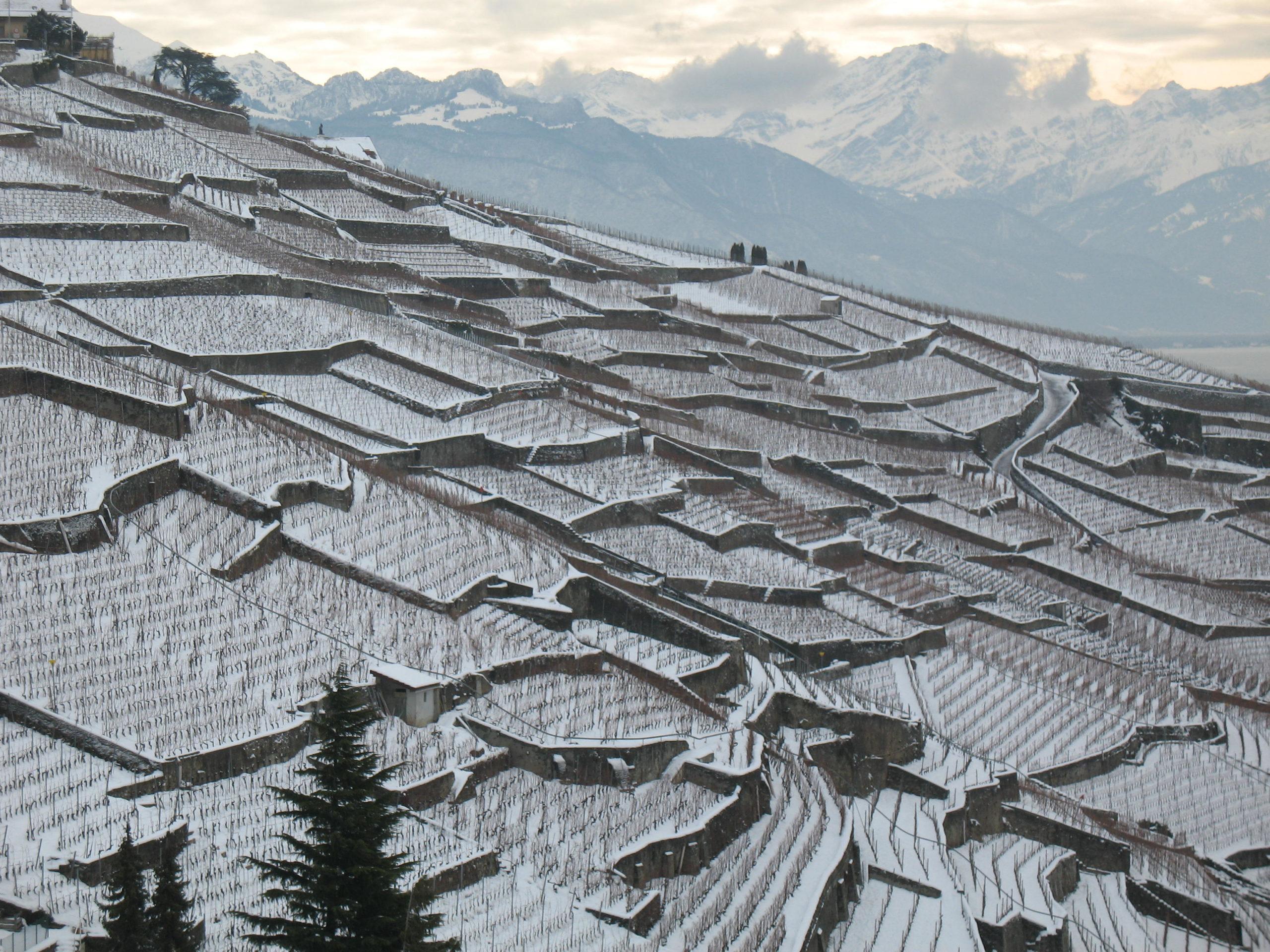 Paysage hiver Lavaux