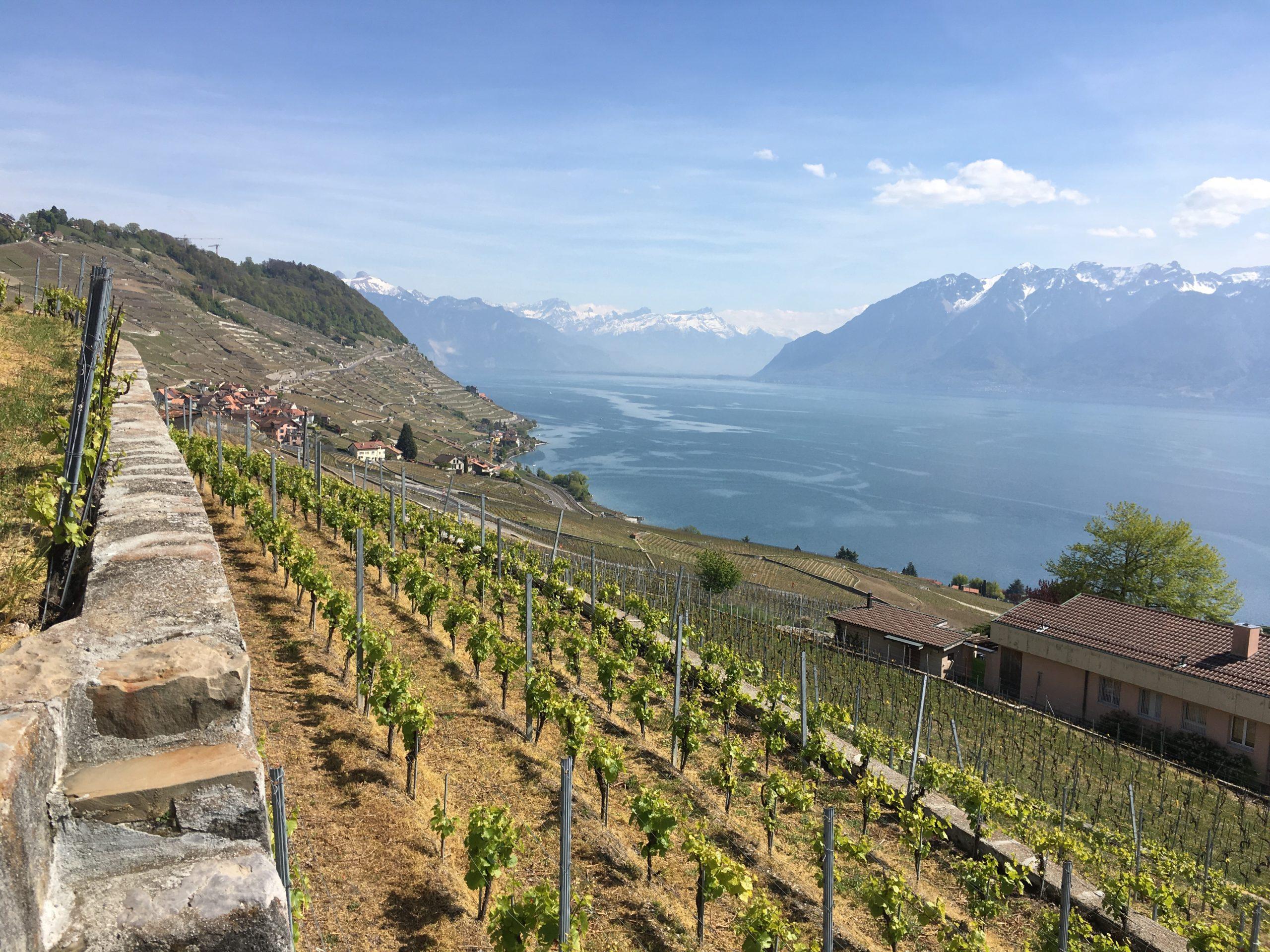 Vignoble Lavaux