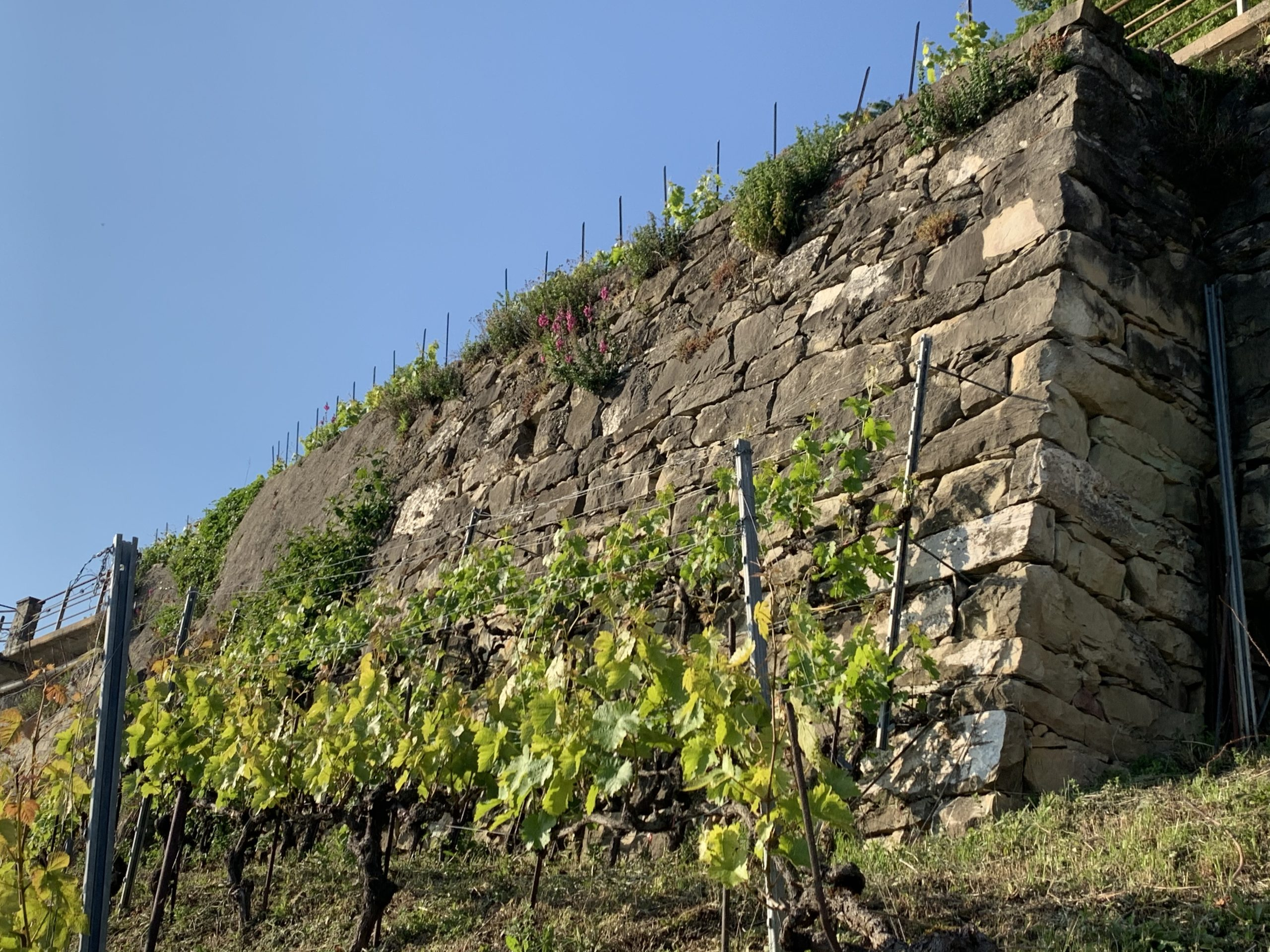 Mur dans le haut de Pierre, Blaise Duboux